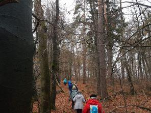 Durch den Kohlwald nach Oberkalbach (4)_1