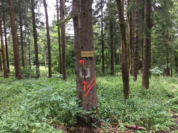EXTRATOUR Basaltweg (11)