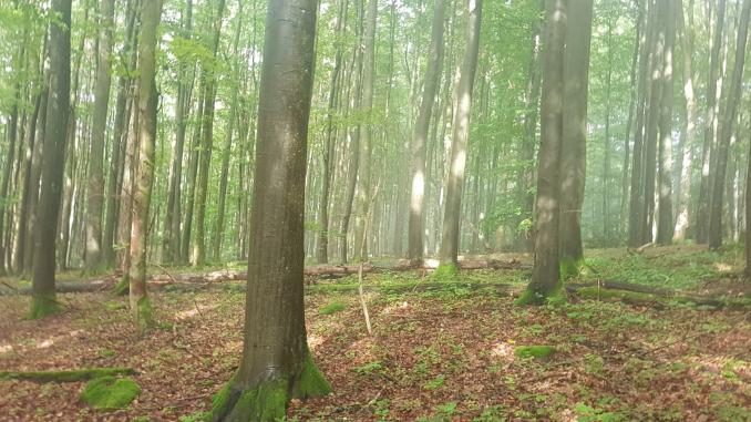 EXTRATOUR Basaltweg (7)